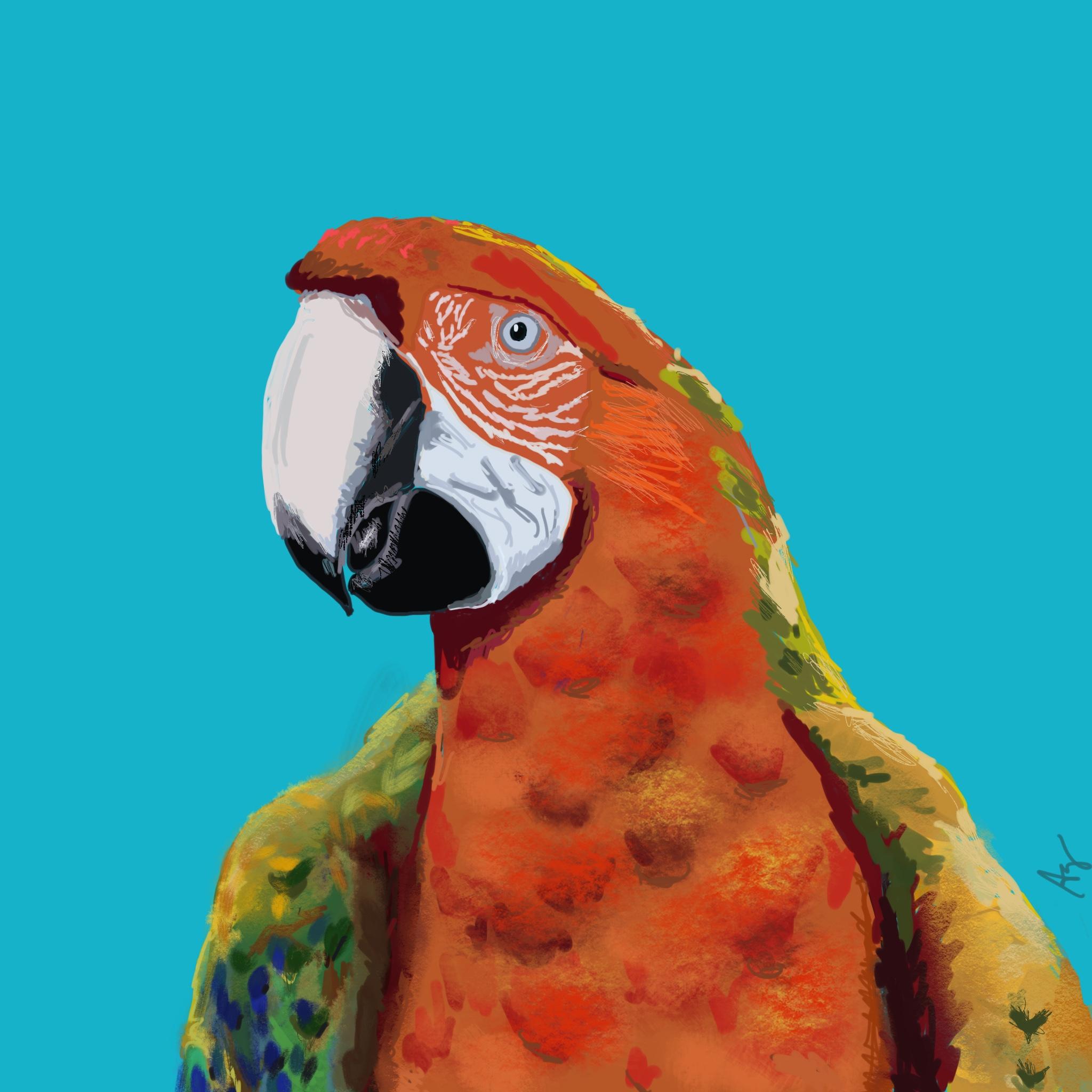 greenberg-parrot